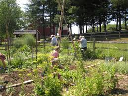 maryland native plants our projects carroll county master gardeners