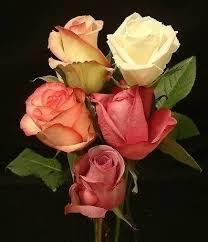 imagenes flores bellisimas flores para ti imágenes bellas
