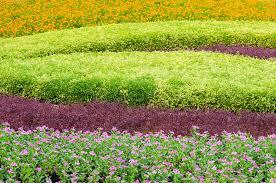 beautiful ornamental plants tree tropical landscape and flower