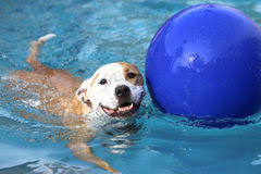 happy dog at the swimming pool stock image image 59463227