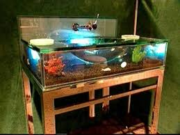 unique bathroom vanity ideas aquarium sink trellischicago