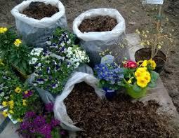 Horse Manure Vegetable Garden by Garden Horse Manure For Sale U0026 Delivery