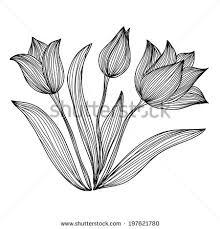 Flowers Designs For Drawing Hand Drawn Crocus Flowers Elegant Vintage Stock Illustration