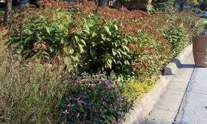 in fall central ohio rain garden initiative central ohio rain garden