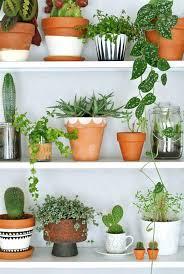 floor plants home decor plants home decor great ideas to display houseplants living room