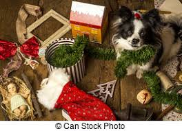 stock photo of bad christmas puppy cocker spaniel puppy chewing