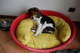 cuccie per cani tutte le offerte cascare a fagiolo cuccia per cani fai da te tutte le offerte cascare a fagiolo