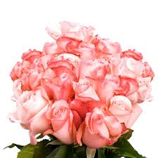 100 Roses Globalrose Fresh Light Pink Color Roses 100 Stems Livia 100