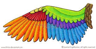 Bird Wing - bird wing diagram by khiton on deviantart
