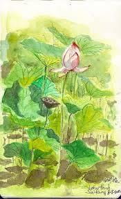 sketching hong kong 港人畫港 live sketch of lotus in sai kung