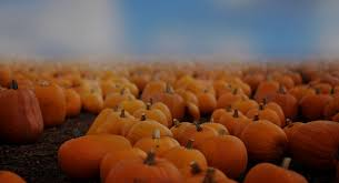 halloween freebie pumpkin patch digital backdrops u0026 overlays halloween freebie