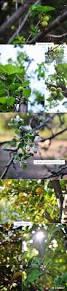 spring pickin u0027s march u2013 april 2012 dearest nature