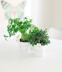 10 tiny herb garden ideas that will fit in any apartment brit co
