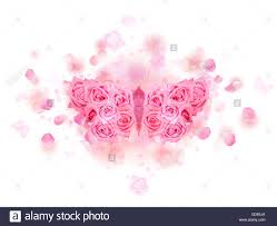 mirrored butterfly with spreading wings made of pink roses on a