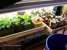 Grow Lights For Plants Grow Lights For Starting Seeds Indoors Empress Of Dirt