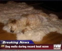 Melting Meme - breaking news dog melts during record heat wave cheezburger