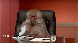 Baboon Meme - office monkey gif find share on giphy