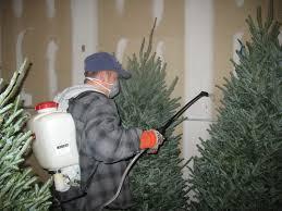 trees wreaths giftsphotos