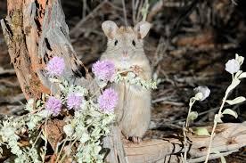australian native plant species saving australia u0027s native animals from extinction