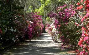 Best Public Gardens by America U0027s Most Beautiful Gardens Travel Leisure