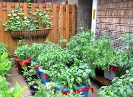how to start a garden in your backyard how to start a vegetable