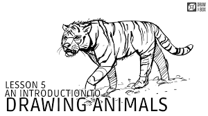 lesson 5 drawing animals
