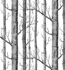 modern minimalist birch tree pattern waterproof wallpaper wall modern minimalist birch tree pattern waterproof wallpaper wall paper roll for livingroom bedroom 20 8 in32 8 ft 57 sq ft black cream white amazon com