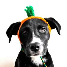 halloween knit fabric carrot costume for dogs custom sizing hand knit dog hat