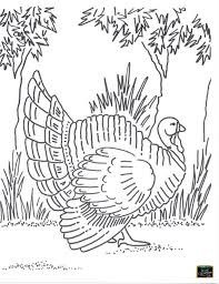 Thanksgiving Fun Pages 84 Best Free Teaching Tools Kids U0027 Coloring Pages Images On