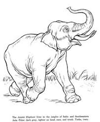color book printing animal coloring pages kids coloring pages