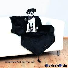 protection canap chien protection canape chien plaque protection canape chien