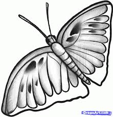 how to sketch a butterfly by sketch drawing technique