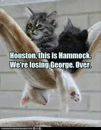 Kittens Memes - caturday 22 7 2017 world hammock day the daily kitten