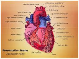 cardiac blood vessels powerpoint presentation template is one of