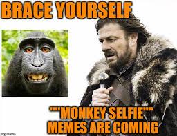 Brace Your Self Meme - brace yourself monkey selfie memes are coming