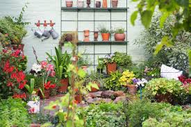 10 tips meant to enhance your gardening and backyard landscaping