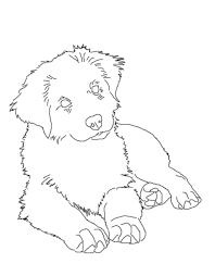 australian shepherd 500 turtle color pages coloring page 14 australian shepherd
