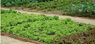 when home gardens are illegal sustainable america