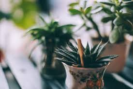 Fragrant Indoor Plants Low Light Best Houseplants For Low Light Low Light Houseplants