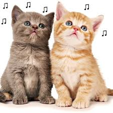 cat photo album the purrfect song for your puss proven by science gigwise