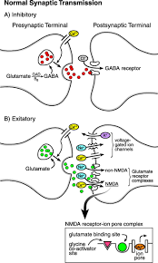 back to basics the pathophysiology of epileptic seizures a
