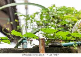 agriculture concept closeup plant test tube stock photo 386489005