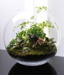 terrariums u2026 fish bowl gardening what u0027s on jimmy b u0027s mind