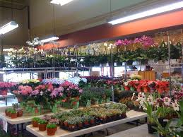 san francisco florist visit to the wholesaler san francisco flower mart flirty