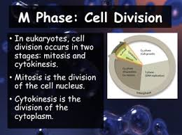 10 2 the process of cell division powerpoint and guided notes
