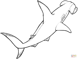 awesome and beautiful hammerhead shark coloring page