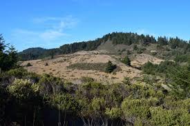 blue mountains native plants natural history