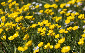 buttercups riverside wallpapers relax this autumn in our warm and luxurious en suite shepherds hut