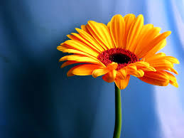 nature flowers wallpaper nature wallpapers for free download about