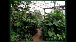 indoor forest gardens using low energy climate battery technology